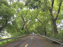 风雨林荫路行车