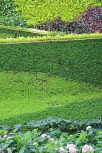 绿色植物平面背景