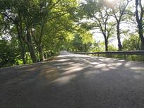 阳光林荫路