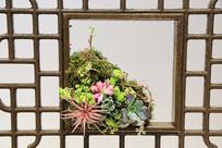 窗户架上的多肉植物