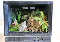 电视机园艺花盆