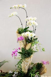 花卉盆景园艺