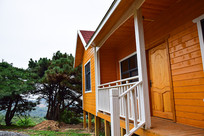 黄色房屋和绿色松树