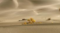 沙漠里的生命