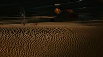 沙漠纹理金胡杨