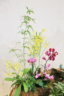 世园会园艺鲜花盆景