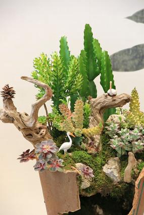 仙人掌盆景插花