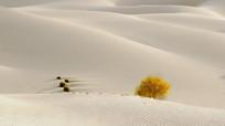 银色沙漠金胡杨