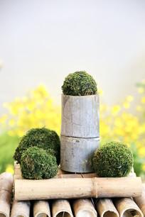竹节苔藓球展示台
