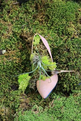 废弃鞋子园艺绿植
