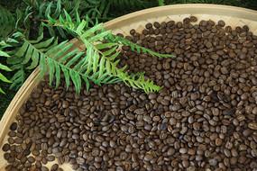 簸箕中的咖啡豆
