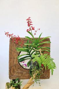 空调外机蕨叶插花盆景