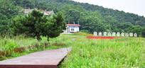绿色草地间的步道