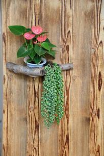 木板背景红掌盆景