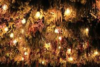 葡萄园中的灯泡星光