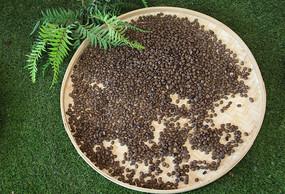 嗮咖啡豆用簸箕