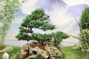 松树假山石