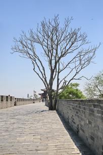 城墙上的大树