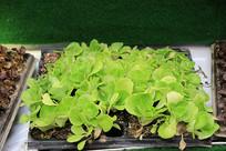 农业技术培育秧苗