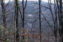 早春的山林