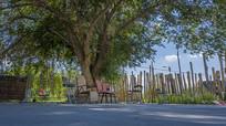 栅栏古树庭院