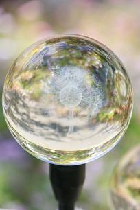 蒲公英水晶球