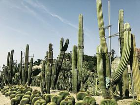 仙人掌植物园