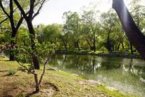 滨水植物景观