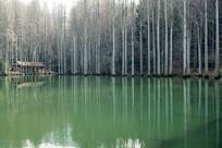 静谧的冬季树林池塘