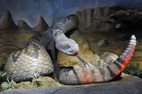 响尾蛇模型