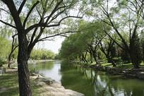 园林滨水植物景观