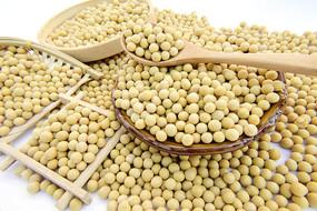 五谷杂粮黄豆