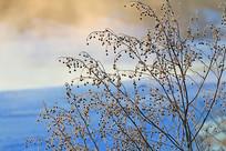草叶阳光风景