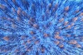 航拍大兴安岭雪原红树林景观