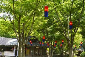 韩国民俗村的传统红蓝色灯笼