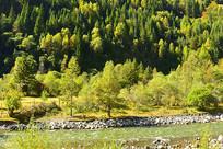黑水达古冰山景区山谷森林