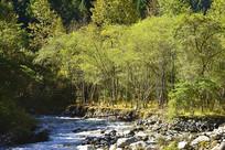 四川黑水县山谷森林和河流