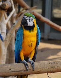 彩色羽毛的鸟