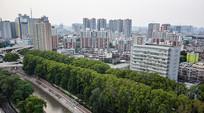城市高楼和行道树