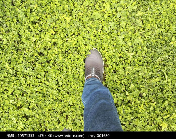 绿草地脚印图片