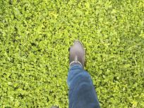 绿草地脚印