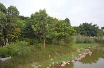 公园河边树林