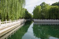 济南珍珠泉及岸边柳树