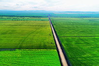 绿色田野公路
