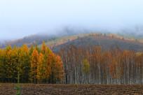 山林秋色晨雾