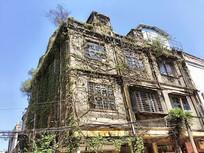 特色爬藤复古建筑