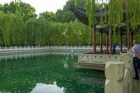 珍珠泉绿色垂柳
