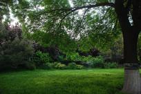 济南大明湖公园绿色美景