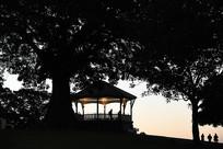悉尼公园亭子树木剪影