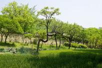 韩国富贵人家庭院和麦田